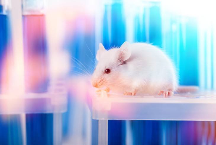 Research lab with a white rat