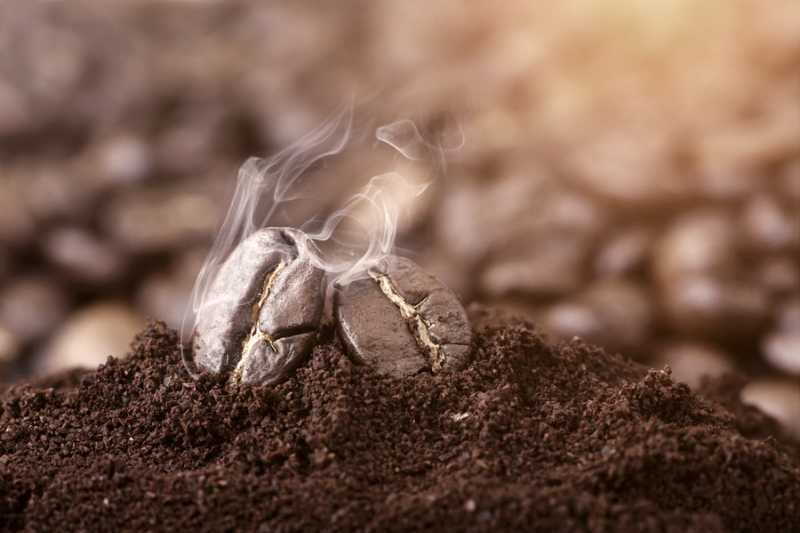 Coffee grounds as a renewable energy source